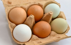 Vše, co potřebujete vědět o vejcích -